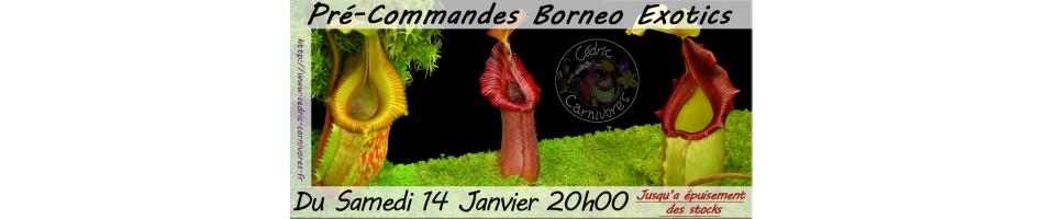 Borneo exotics pre-orders